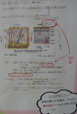 解剖生理の素敵ノートさん