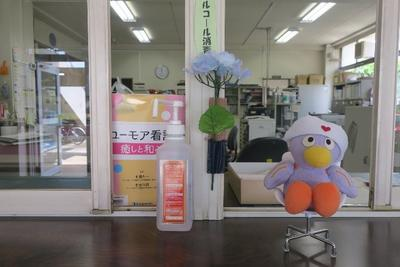 事務室前の紫陽花とコバトン